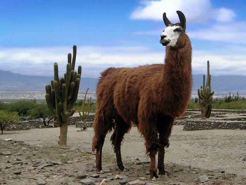 Et Kongerike for en Lama - Kuzco & Pacha - YouTube