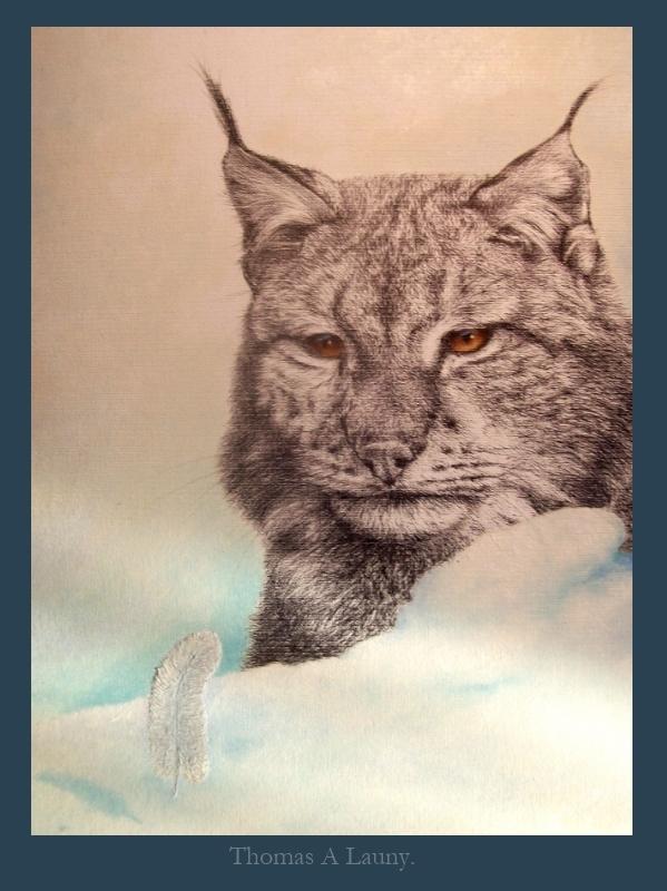 Lynx in snow v
