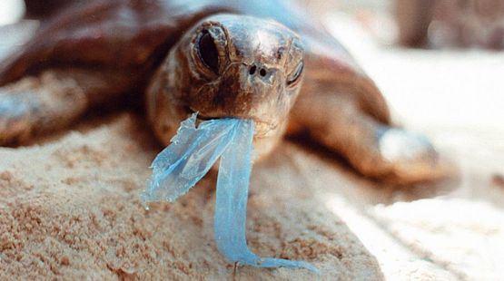 turtle-eating-plastic-bag-r-prendergast