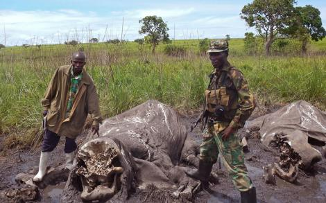 elephants-slaugtered-by-poachers-in-garamba-national-park