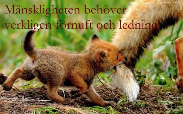 little-fox-big text