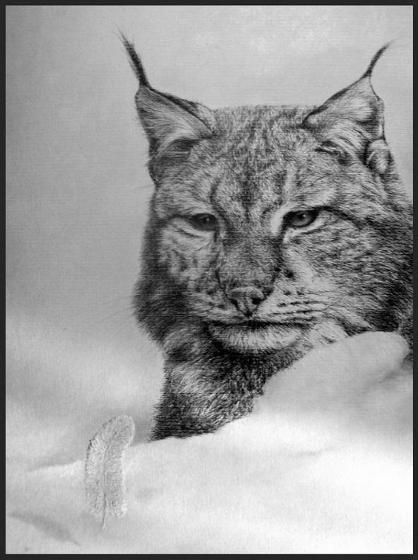 Lynx in snow v (2)